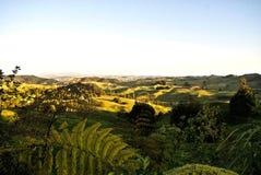 Ландшафт Новой Зеландии Стоковая Фотография RF
