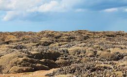 ландшафт Нормандия Стоковые Фотографии RF