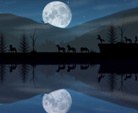 Ландшафт ночи лошадей Стоковое фото RF