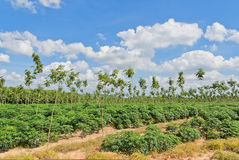 Ландшафт обрабатываемой земли стоковое изображение rf
