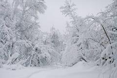 Ландшафт облаков леса зимы Стоковая Фотография
