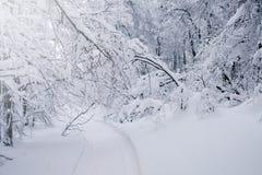 Ландшафт облаков леса зимы Стоковое Изображение RF