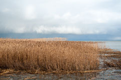 Ландшафт озера и тростников Стоковое Изображение