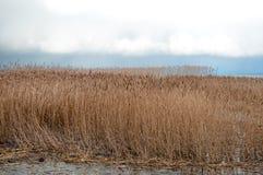 Ландшафт озера и тростников Стоковая Фотография
