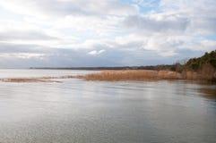 Ландшафт озера и тростников Стоковая Фотография RF