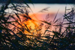 Ландшафт озера на заходе солнца Стоковые Фотографии RF