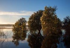 Ландшафт озера с деревьями paperbark в воде Стоковая Фотография RF