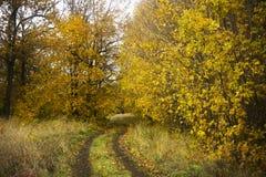 Ландшафт - дорога в лесе осени стоковое фото rf