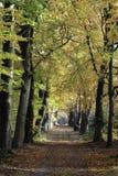Ландшафт дороги осени Стоковое Изображение RF