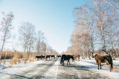 Ландшафт дороги с горой Стоковая Фотография RF