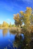 Ландшафт осени - березы золота приближают к пруду Стоковое фото RF