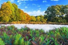 Ландшафт осени в парке Ричмонда Стоковая Фотография