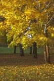 Ландшафт осени в парке Стоковая Фотография