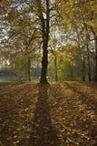 Ландшафт осени в парке Стоковые Фото
