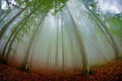 Ландшафт осени в древесинах Стоковая Фотография