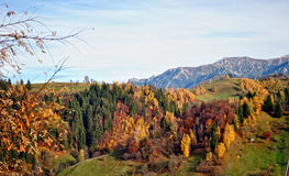 Ландшафт осени горы с красочным лесом стоковые изображения
