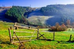 Ландшафт осени, дерево без листьев, iny на зеленой траве, стоковые изображения