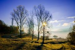 Ландшафт осени, дерево в backlight солнца, водить дороги Стоковая Фотография RF