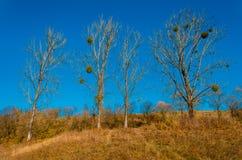 Ландшафт осени, деревья с красочными листьями, заморозком на зеленом gra стоковое фото rf