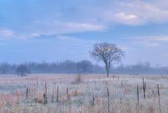 Замороженная высокорослая прерия травы Стоковые Фото