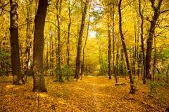 Ландшафт осени золота с тропой - красивыми деревьями, морем падения стоковая фотография