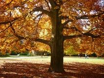 Ландшафт осени красивый Стоковая Фотография RF