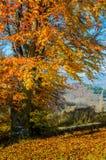 Ландшафт осени Лес с желтыми листьями, деревянная скамья осени стоковая фотография