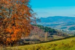 Ландшафт осени Лес с желтыми листьями, зеленая трава осени стоковая фотография