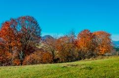 Ландшафт осени Лес с желтыми листьями, зеленая трава осени стоковые изображения rf