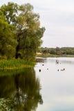 Ландшафт осени на озере в центральной России стоковая фотография