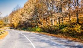 Ландшафт осени, дорога водя в горы, голубое moun стоковые изображения rf