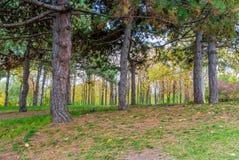 Ландшафт осени, парк в осени Стоковые Изображения