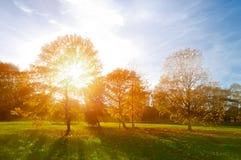 Ландшафт осени - пожелтетый парк осени в вечере осени солнечном Красочный взгляд осени парка захода солнца с солнечными лучами Стоковые Фотографии RF