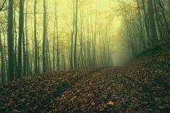 Ландшафт осени прикарпатский Стоковая Фотография RF