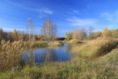 Ландшафт осени - пруд в парке Стоковое Изображение RF