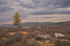 Ландшафт осени с горной цепью на заднем плане света - розового неба Одичалое фото пейзажа леса природы с затишьем Стоковые Изображения RF