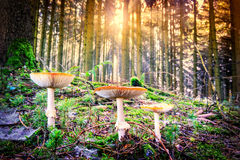Ландшафт осени с грибами леса Стоковое Изображение