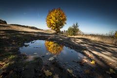 Ландшафт осени с деревом стоковое изображение rf