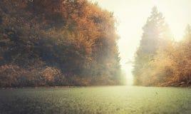 Ландшафт осени с деревьями на туманном утре Стоковое Изображение RF