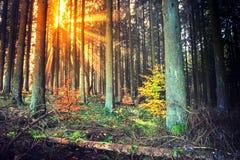 Ландшафт осени с заходом солнца в лесе Стоковые Фотографии RF