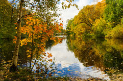 Ландшафт осени с кленовыми листами осенний парк валы листьев осени Стоковое фото RF