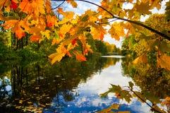Ландшафт осени с кленовыми листами осенний парк валы листьев осени Стоковое Изображение