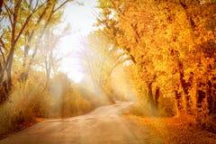 Ландшафт осени с солнечными лучами Стоковые Фото