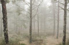 Ландшафт осени с туманом Стоковые Изображения