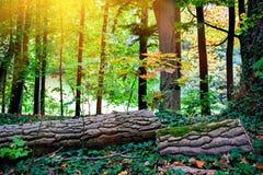 Ландшафт осени с упаденным стволом дерева Стоковые Фотографии RF