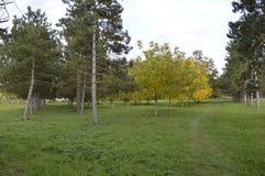 Ландшафт осени с цветами контраста Стоковая Фотография RF