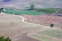 Ландшафт осени Тосканы стоковое фото rf