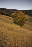 Ландшафт осени Стоковая Фотография RF