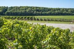 Ландшафт осенью #2 виноградника стоковые изображения