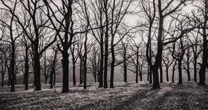 Ландшафт Осень дубы с упаденными листьями стоковые фотографии rf